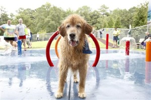 Pets Fantasy Dog Parks